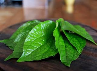 daun sirih sebagai oabt tradisional mata bintitan