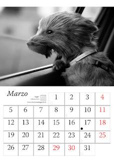 foto,perro,calendario,2018,animales