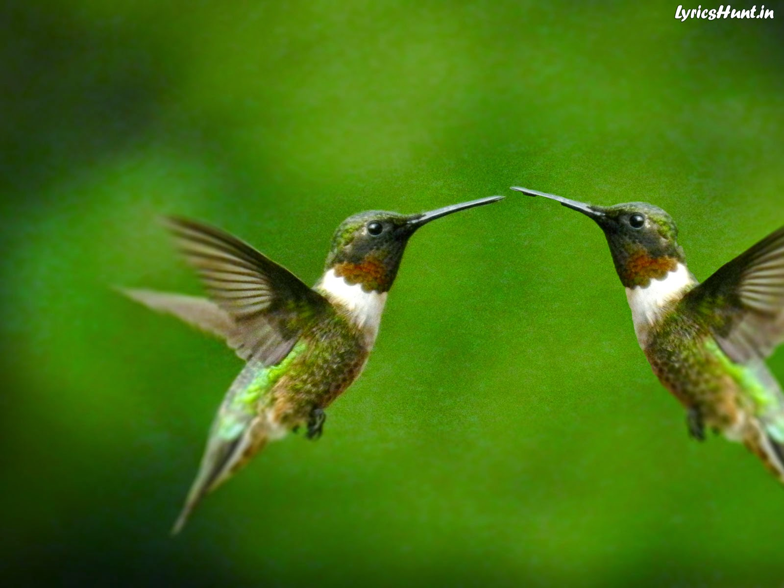 HIGH DEFINITION BIRDS WALLPAPER | FLYING BIRDS IMAGES