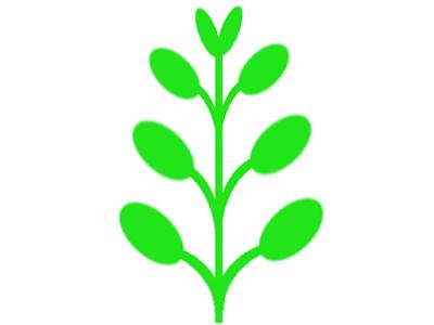 ハイグロフィラなどの対生の水草模式図