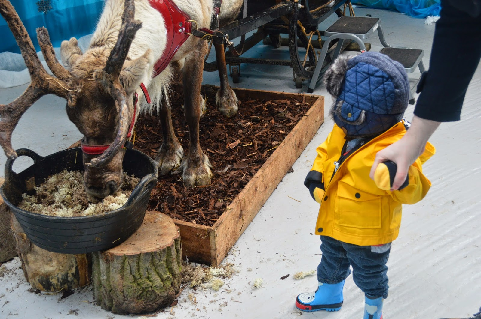 Blithbury Reindeer Lodge - To Become Mum