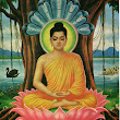 Week 12 Essay: The Life of Buddha