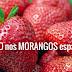 VENENO nos MORANGOS espanhóis