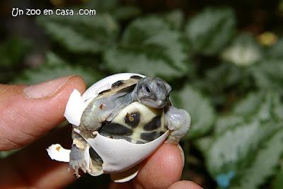 Cría saliendo del huevo