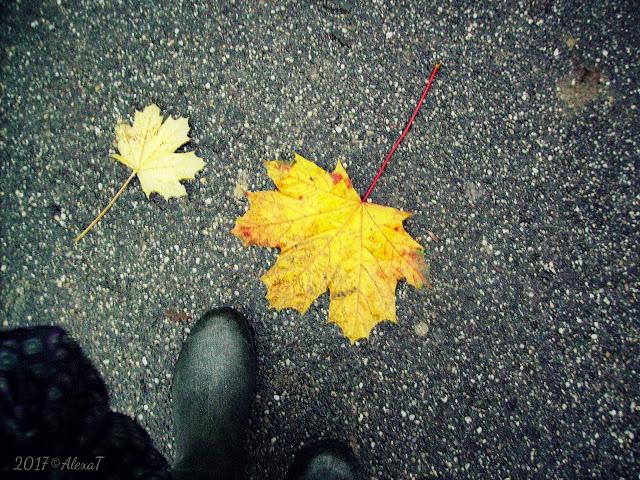 """It looks that autumn looks like life itself :)"""