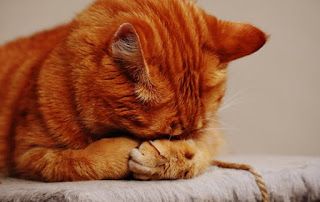 7 hình ảnh động vật dễ thương khiến bạn không ngậm.........
