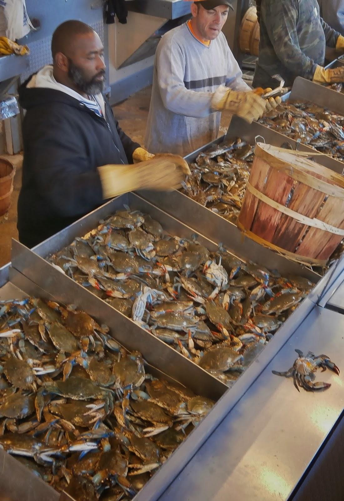 Corfu blues and global views washington dc national for Washington dc fish market