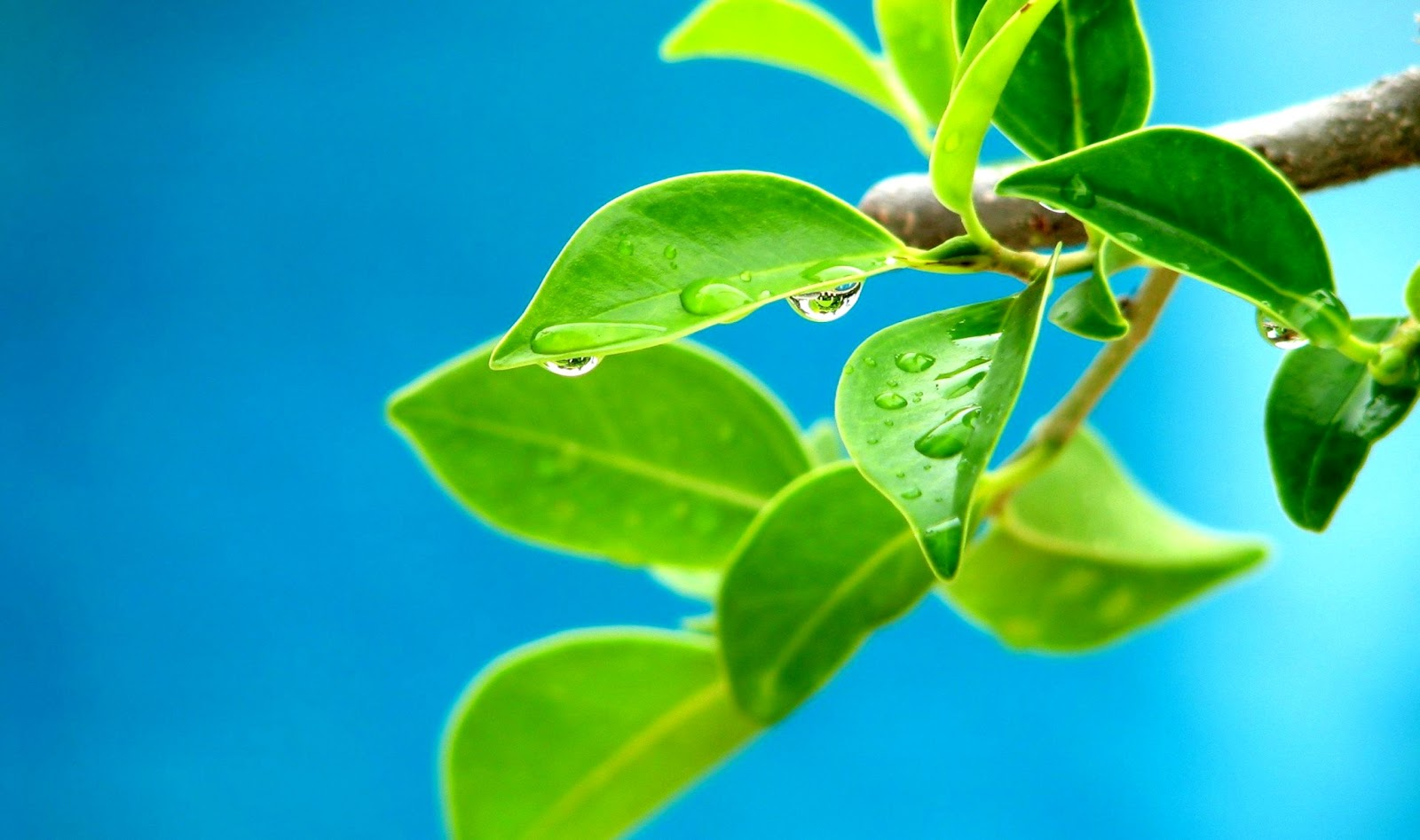 Tree Green Leaves Nature Hd Wallpaper Wallpapers Colorful