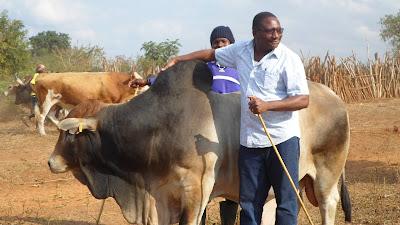 SAM 2126%2B %2BCopy - Ufugaji katika shamba la Rushu Ranchi Kisarawe