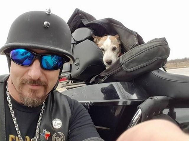 """[HEROE] Motociclista rescata perrito abandonado en la carretera y lo vuelve su mejor """"copiloto"""""""