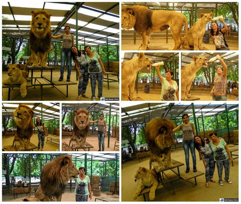 Zoo Luján (Buenos Aires) - leão