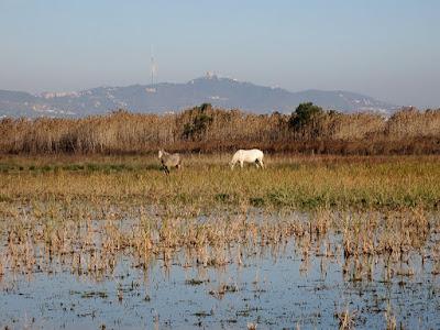 Senderismo por el parque natural del Llobregat
