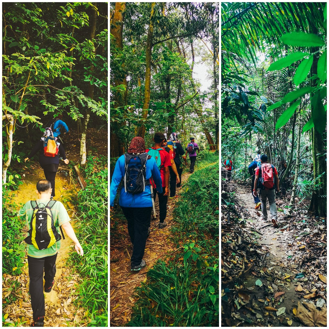 Kota Damansara Community Forest (KDCF) - trek