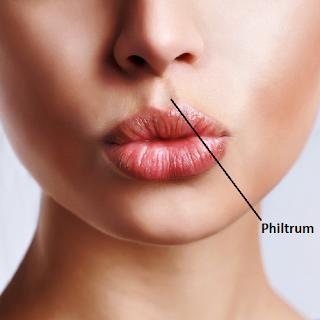 Fungsi Lekukan Bagian Tengah Bibir Atas ( Philtrum )