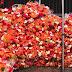 Break into Hanoi flower market - Preparing for Tet