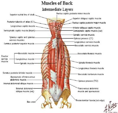 Backpain relief