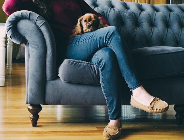 immagine: hikikomori - pet therapy