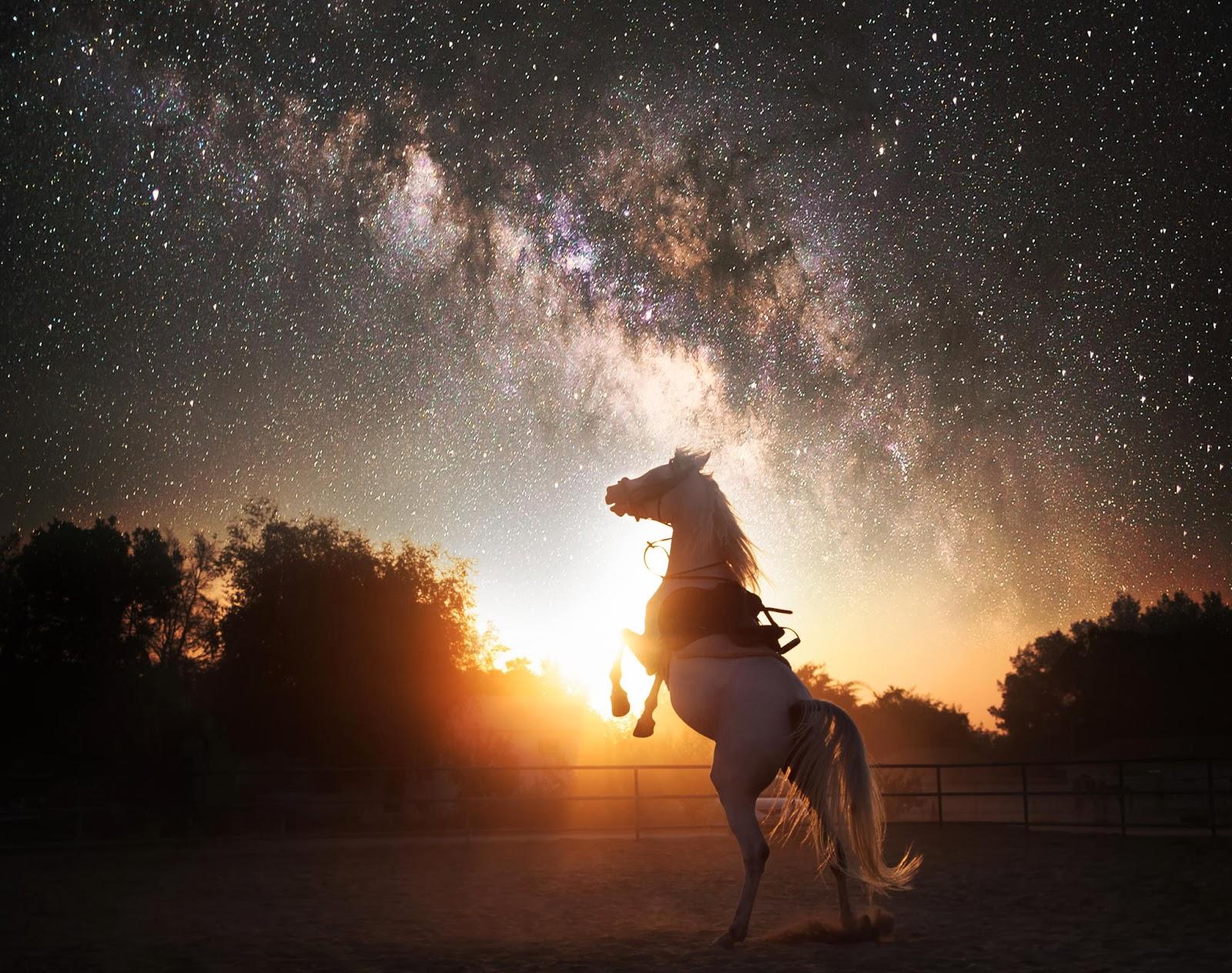 Trại nuôi ngựa tương lai
