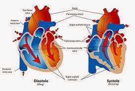 Penyakit Jantung dan Obat Herbalnya