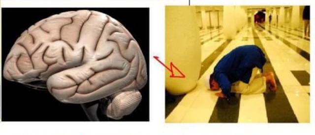 Fakta Terbaru Ternyata Sujud Memiliki Banyak Manfaat Untuk Otak, Inilah Manfaatnya