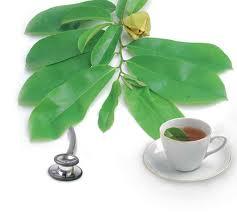 Seputar khasiat daun sirsak sebagai obat herbal untuk atasi berbagai penyakit
