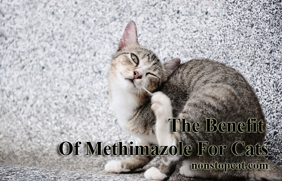The Benefit Of Methimazole For Cats