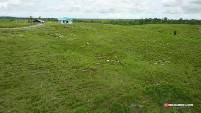 Padang Rumput / Sabana yang luas di Distrik Bomberay Fakfak Papua Barat
