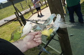 budgie, birds, zoo