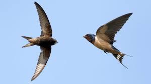 Khasiat konsumsi sarang burung walet untuk kesehatan