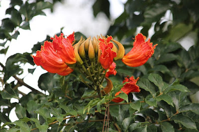Jasa Tukang taman Surabaya pohon bunga peneduh