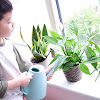 Montessori Practical Life: Indoor Plant Care on Winter