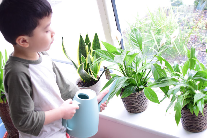Montessori Practical Life: Indoor Plant Care in Winter
