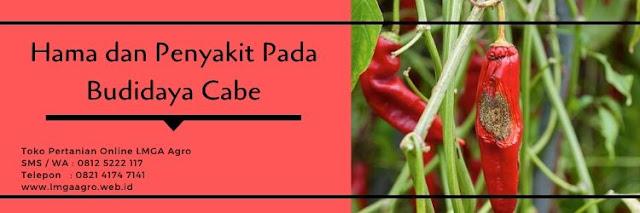 hama tanaman,hama,penyakit tanaman,cabe napoli,benih cabe napoli,lmga agro