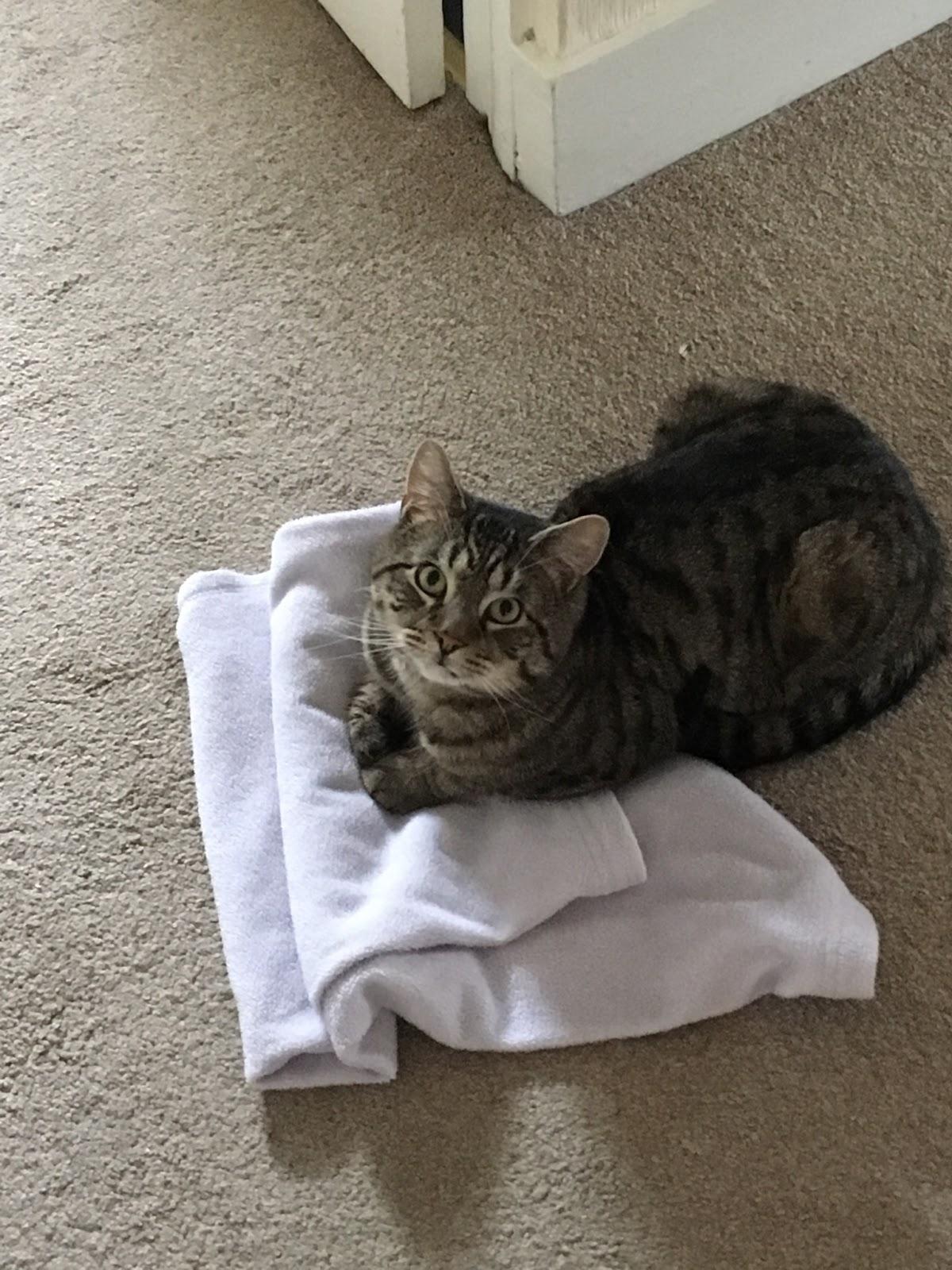 Mufasa on a blanket