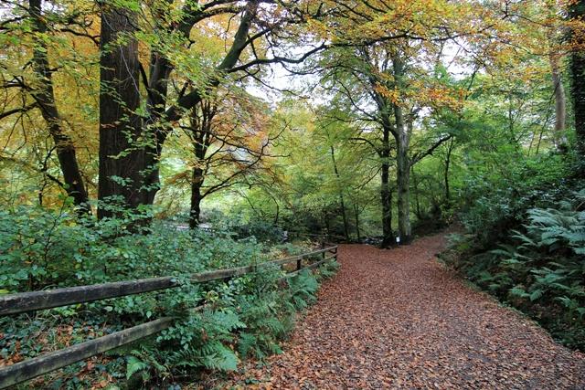 Glenariff Forest