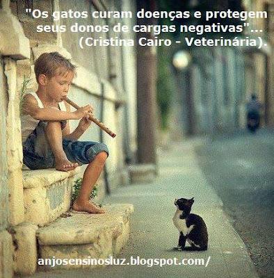 """""""Os gatos curam doenças e protegem de cargas negativas""""."""