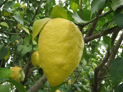 Η θεραπεία του λεμονιού