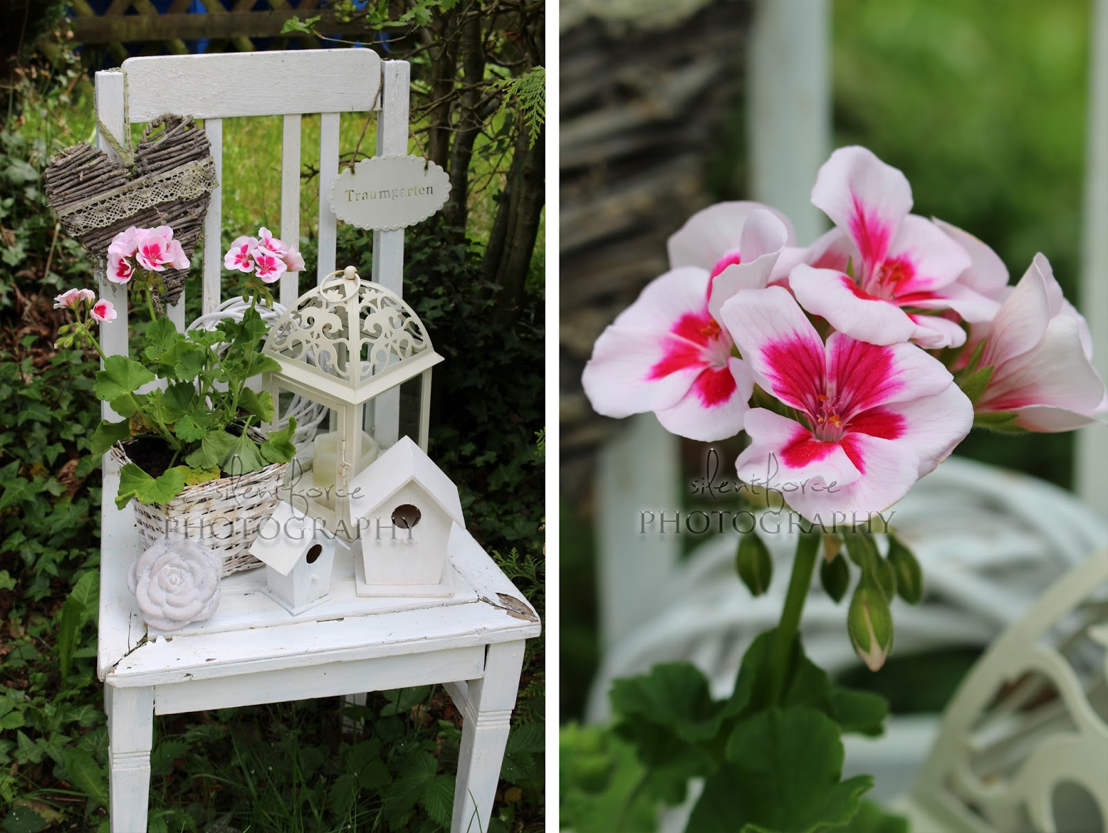 zeit f r sommerblumen silentforce garden. Black Bedroom Furniture Sets. Home Design Ideas