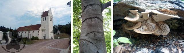 Suede-Scanie-Falsterbo-parc-eglise-arbre-champignon
