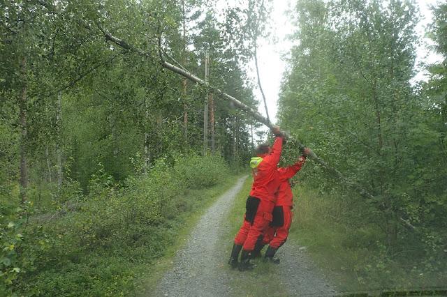 Kaksi henkilöä nostaa tien yli kaatunutta koivua