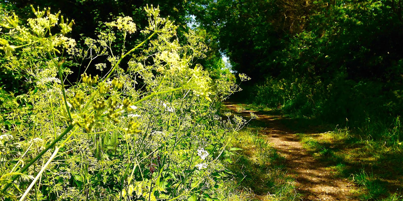 Cambridgeshire Walks Swavesey To Church End