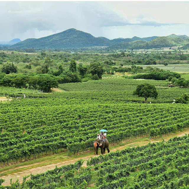 Perfect View of Hua Hin Hills Vineyard, Thailand,things to do in bangkok,bangkok travel tips blog advisory packages deals guide,bangkok attractions map top 10 for adults kid blog 2016 tours shopping,bangkok tourism shopping,bangkok shopping places destinations things,visit bangkok shopping,bangkok shopping things to buy,bangkok destinations to visit,destinations bangkok airport airways,bangkok air destinations,bangkok travel destinations,bangkok holiday destinations,bangkok honeymoon destinations,bangkok train destinations