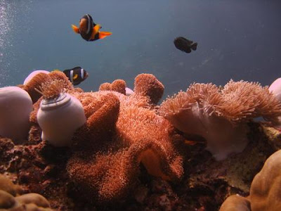 Maya Bay reef