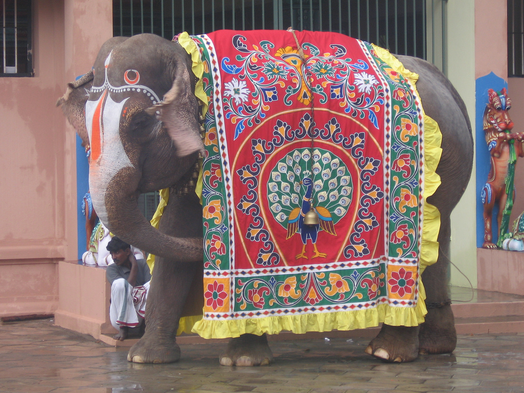 painted indian elephant wallpaper - photo #10