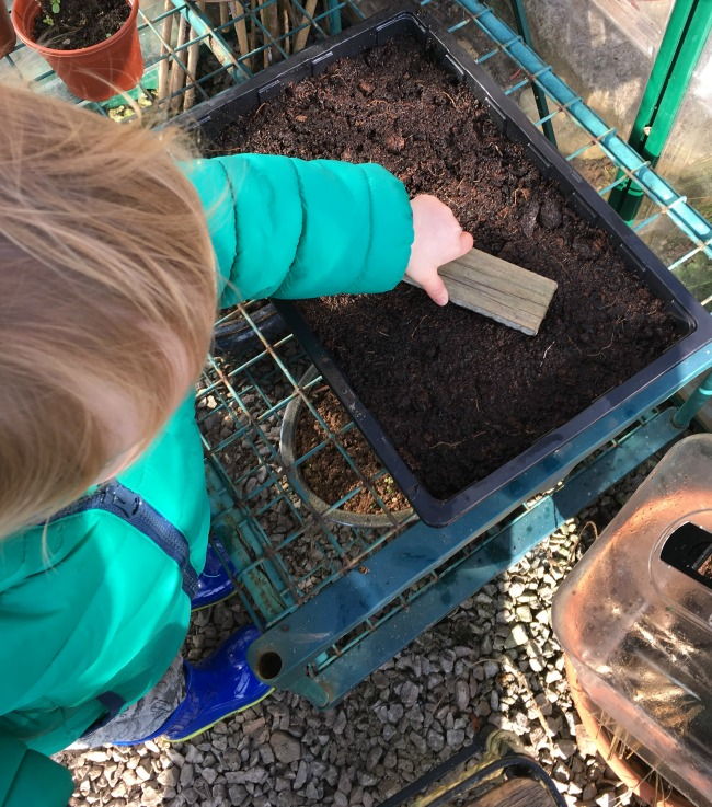 How-to-Sow-Seeds-for-Absolute-Beginners-image-of-toddler-tapping-compost-with-piece-of-wood