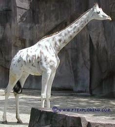 Σπάνια Λευκά Ζώα