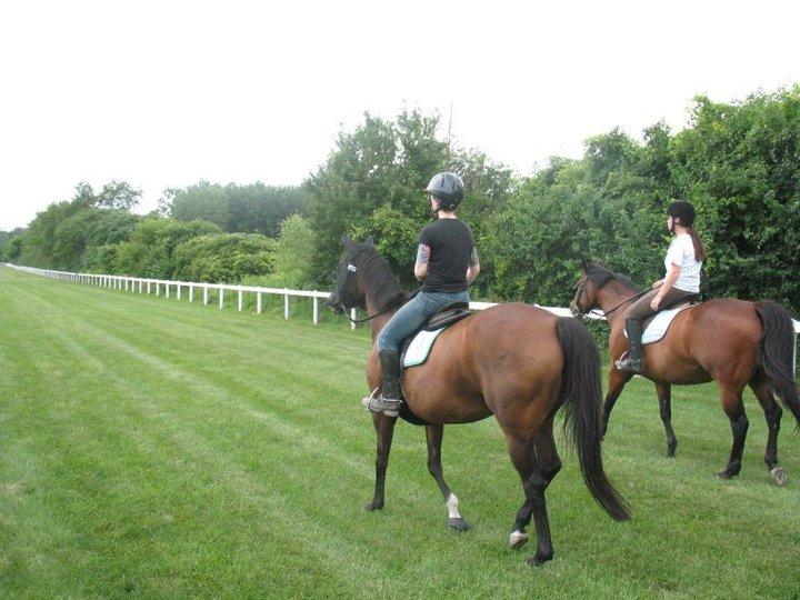 Through The Eyes Of A Deaf Equine Fanatic Danada Farm