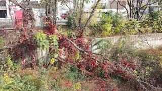 Autumn Colours, Bank, Yambol, River Tundzha,