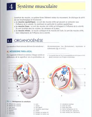 Télécharger Livre Gratuit ANATOMIE Système musculaire pdf