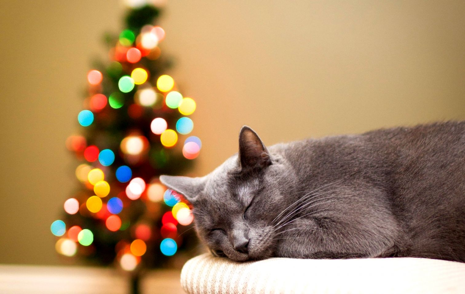 Cat Christmas Lights New Year Hd Wallpaper  Wallpapers Comp